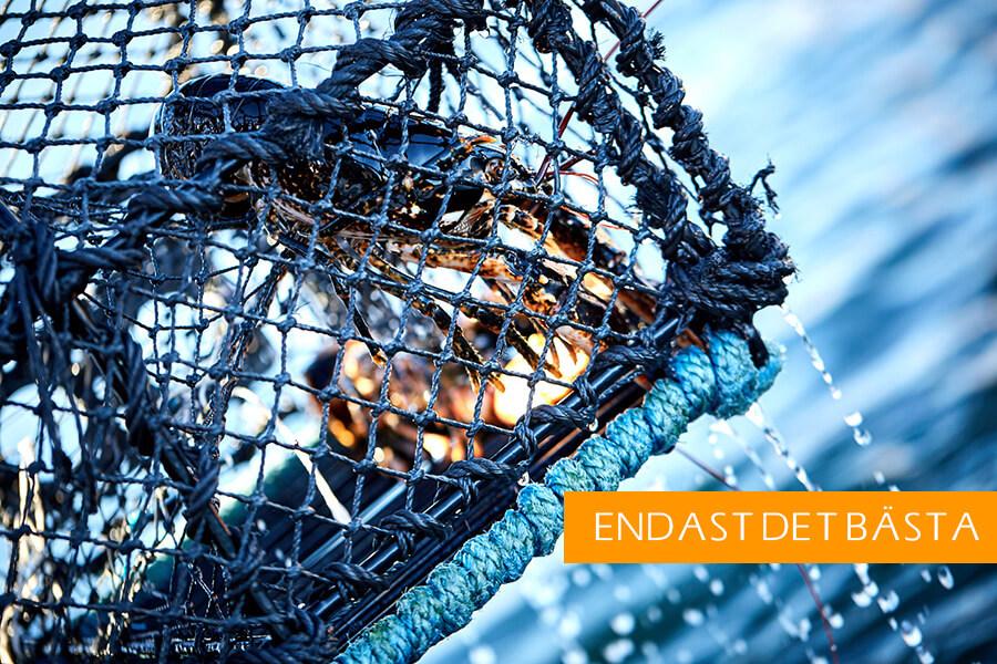 Följ med på jakten av Västkustens svarta guld. Efter hummerfisket avnjuts en fyrarätters supé med det bästa av Bohuslän.