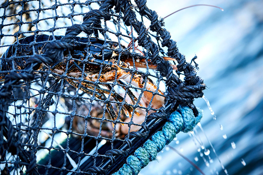 Follow us on the hunt of the North Sea lobster. Worlds best seafood. After fishing enjoy a four meal lobster supé at the finest restaurant in the harbor.