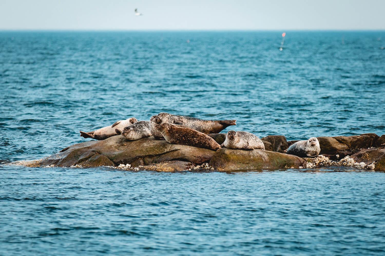 Seal safari Gothenburg